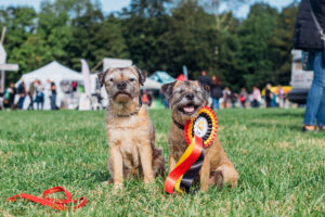 The North East Dog Festival returns for 2021, but this year the fun is over two days!